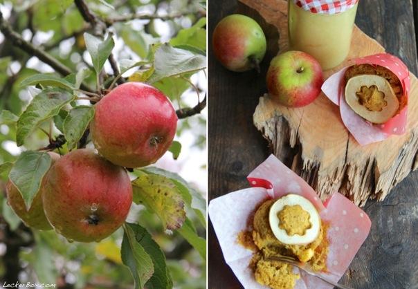 wpid-Apfel-Kuerbis-Muffins_6-2013-10-13-15-351.jpg